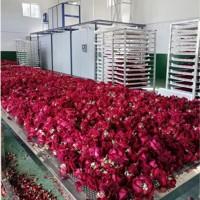 玫瑰花茶菊花茶烘干机,大型隧道烘干机流水线